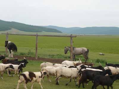 bookblast livestock chichin valley mongolia