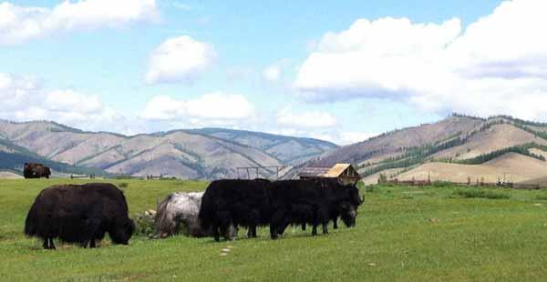 boookblast chichin valley mongolia